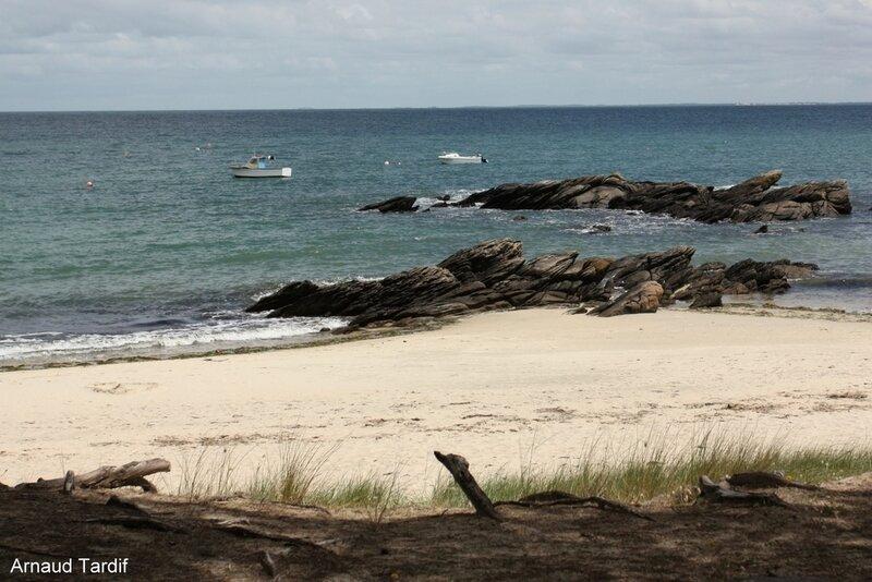 00557 Noirmoutier Juin 2020 - L'Ile d'Yeu de Port Joinville à la Plage des Vieilles - La Plage des Sapins