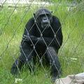 zoo - boring !!!