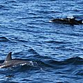 Escorte de dauphins