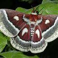 Butterfly (60)