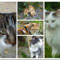Des chats en veux tu , en voilà ............................