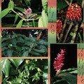 Flore tropicale 1