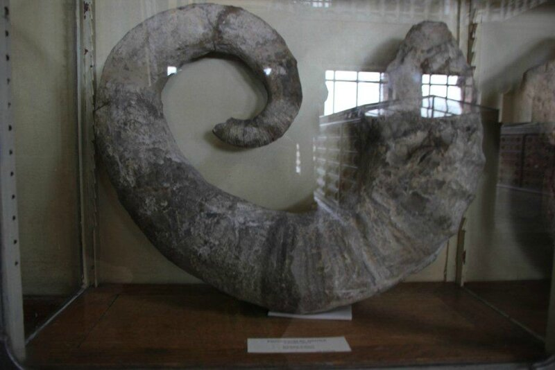 ammonite emerici