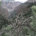Grand Canyon - Through the trees