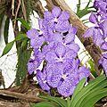 Dans la serre aux orchidés