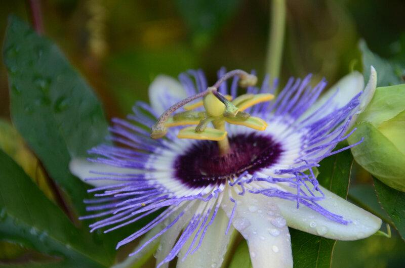 Prendre l'air, jardiner… pour garder le moral !