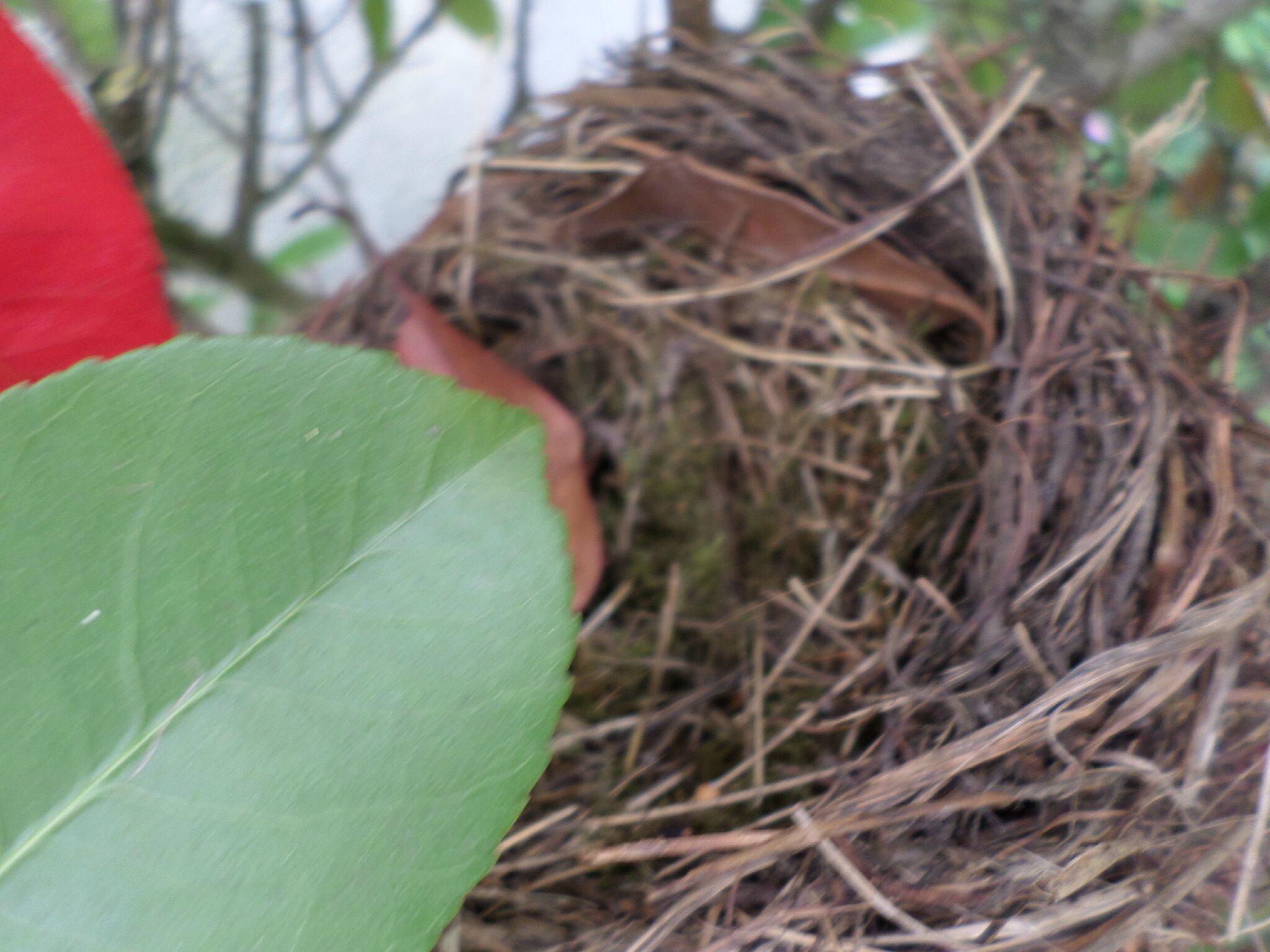Dans mon jardin,