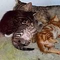 maman et ses chatons 2
