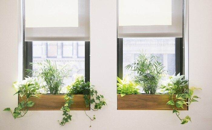 The_Sill_Space_13_gardenista