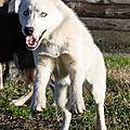 HUMY femelle née le / 2012 non lof