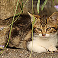 Photos JMP©Koufra 12 - Le Caylar - chat - chaton - 16072019 - 0051