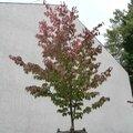 L'automne en devenir