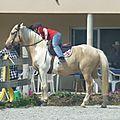 Jeux équestres manchots 2013 (228)