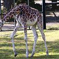 zoo de cazaux 17