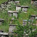 2016/06 (2) le miel et la nature sauvage