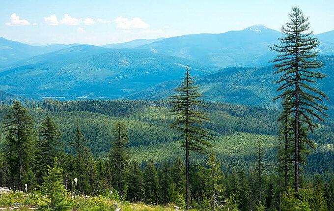 vallee-du-yaak-montana