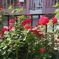 photos de belles pantes et fleurs 007