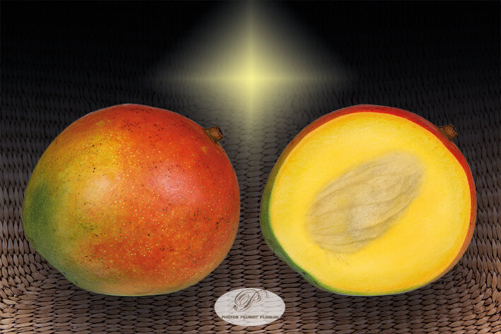 MANGUE_DU_PEROU_Mangifera_indica_fruit_entier_et_coupe