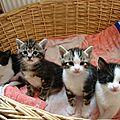 Petits chatons et leurs caresses/małe kotki i ich pieszczoty