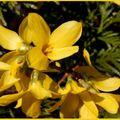 Une fleur du printemps