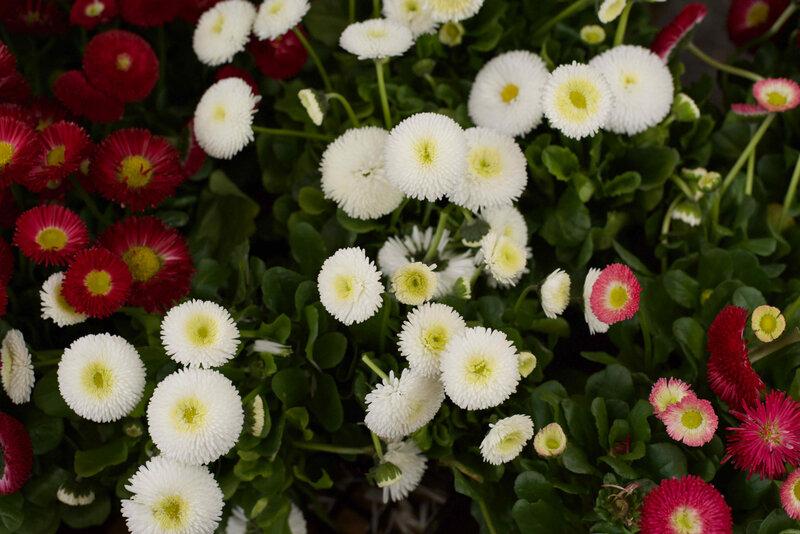 fleurettes du marché - 1