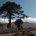 02 - PARQUE NATIONAL LANIN (6)