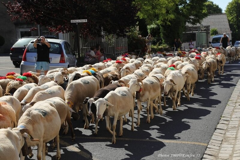Photos JMP©Koufra 12 - Le Caylar Mouton Transhumance - 20062018 - 062