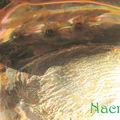 nacre1