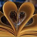 Les chats (2)