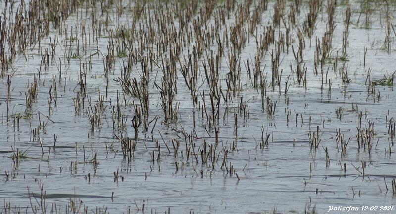rizière Solognote