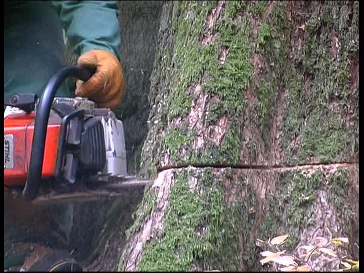 470881756-copeau-bucheron-travail-en-foret-ouvrier-forestier