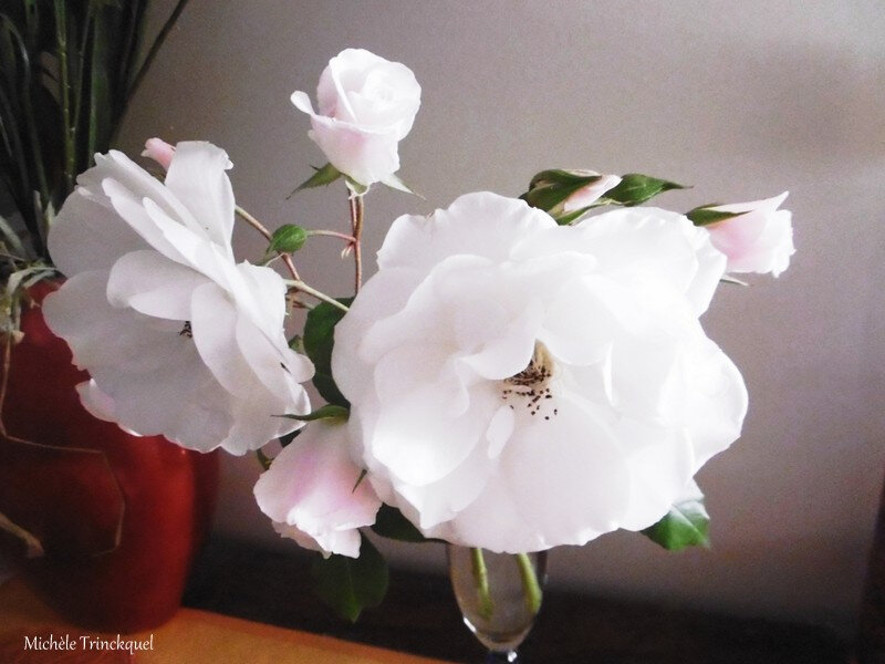 1-Roses blanches 060517