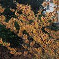 Les floraisons d'hiver