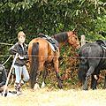 équitation de pleine nature - rallye équestre (54)