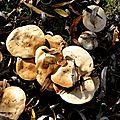 champignon-05938 (2)