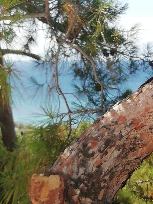 aghios Nikolaos vue et pins
