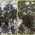 Défi 6 : les nids dans les arbres
