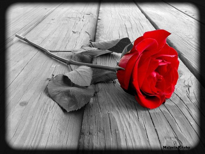 17f1dbfb Rose
