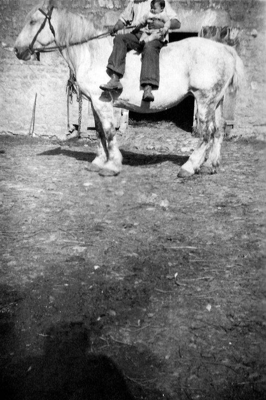 Le cheval mal cadré