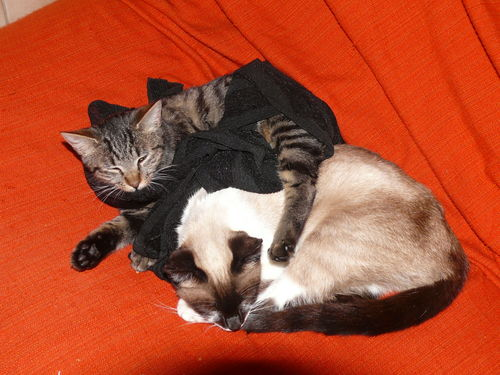 2008 11 09 Deux chats qui dorment