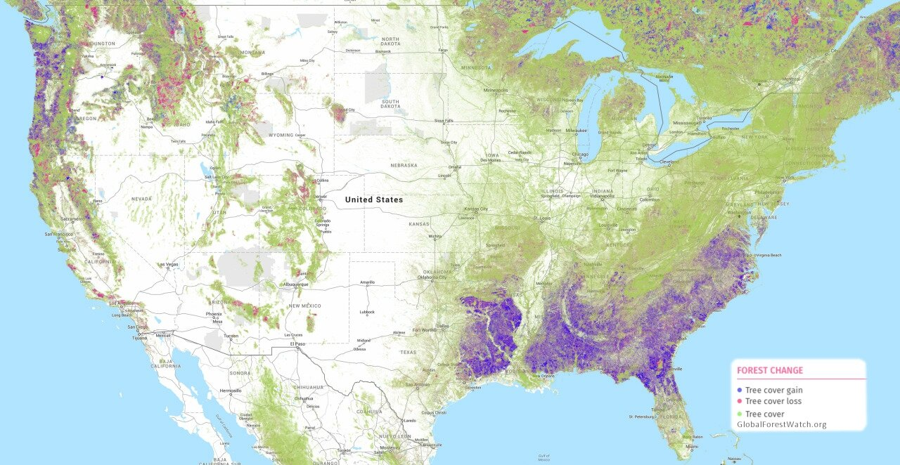 Forest cover change in the US since 2000