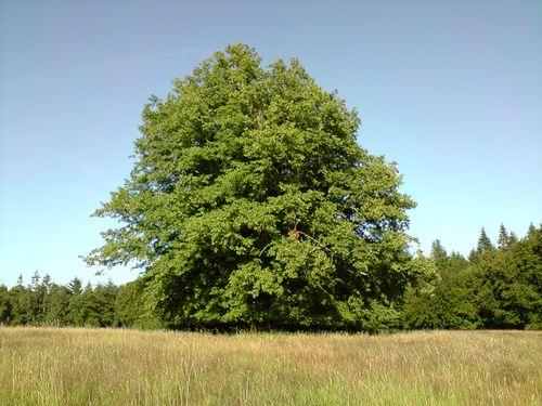 Un arbre...