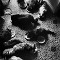 chats-paris-photos-Henri-Cartier-Bresson1