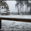 Sous la neige (9)