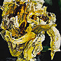 Philippe cognée focuses on flowers in exhibition at galerie templon