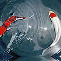 Fish_30x40cm - chassis toile - peint côtés - vernis