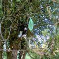 Lytchie dans son arbre préféré