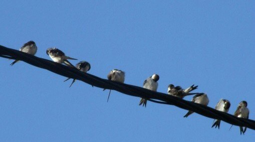 La migration des oiseaux en automne et au printemps...