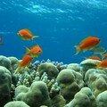 plongee mer rouge