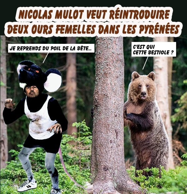 hulot-ours brun3